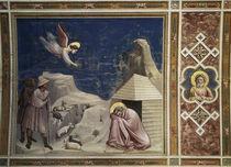 Giotto, Traum des Joachim / Padua von AKG  Images