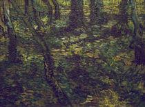 V.van Gogh, Unterholz mit Efeu by AKG  Images