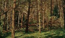 W.Leistikow, Wald (Walddickicht) von AKG  Images