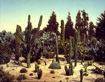 Kakteengarten, Kalifornien / Foto 1902 by AKG  Images