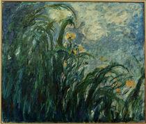 Claude Monet, Gelbe Schwertlilien by AKG  Images