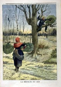 Mistelernte / aus: Petit Journal von AKG  Images