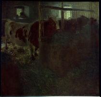 Gustav Klimt, Kuehe im Stall by AKG  Images