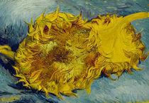 Van Gogh/Zwei abgeschnittene Sonnenbl. von AKG  Images