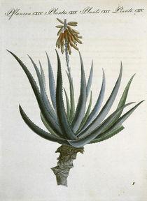 Aloe / aus Bertuch 1809 von AKG  Images