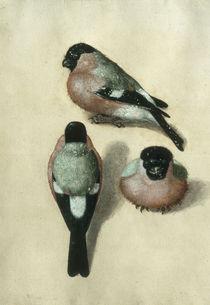 Vogel in drei Positionen / A.Duerer? by AKG  Images