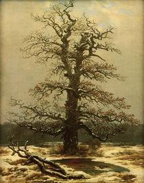 C.D.Friedrich, Eiche im Schnee von AKG  Images