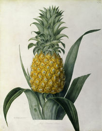 Ananas / Farblitho nach William Hooker by AKG  Images
