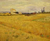 Van Gogh/ Weizenfeld/ Arles, Juni 1888 von AKG  Images