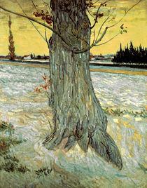 Van Gogh/ Der Baum/ 1888 von AKG  Images