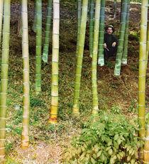 Mann in einem Bambushain / Foto by AKG  Images
