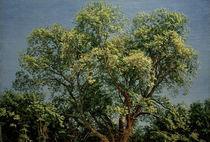 A.A.Iwanow, Baum im Chigi von AKG  Images
