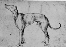 A.Duerer, Windhund by AKG  Images