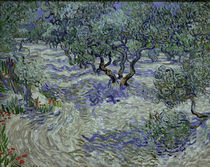 V.v.Gogh, Olivenhain von AKG  Images
