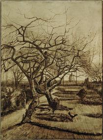 v.Gogh, Garten des Pfarrhauses in Nuenen von AKG  Images