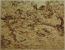 V.van Gogh, Olivenhain von AKG  Images