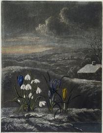 Schneegloeckchen, Krokusse von AKG  Images