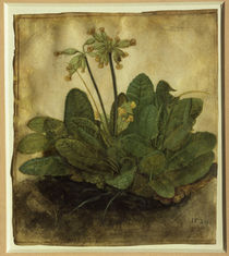 A.Duerer, Schluesselblume by AKG  Images