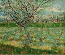 V.van Gogh, Bluehender Obstgarten von AKG  Images