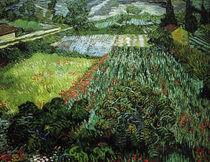 V.v.Gogh, Mohnfeld von AKG  Images