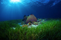 Magical seagrass von Steve De Neef