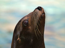 Seal von Ken Williams