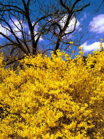yellow and blue in the park by ushkaphotography