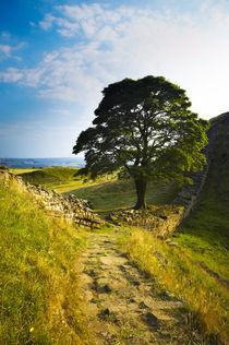 England, Northumberland, Northumberland National Park von Jason Friend