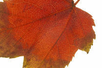 Autumn Leaves von Jason Friend