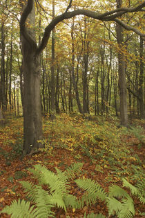 England, Tyne And Wear, Chopwell Woodland Park by Jason Friend