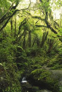 Neuseeland, Westcoast, Westland Nationalpark von Jason Friend