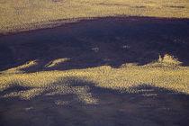 Argentina, Mendoza, Parque Provincial Payunia. by Jason Friend