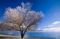 Neuseeland, Otago, Lake Wanaka. von Jason Friend