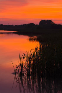 England, Tyne And Wear, Big Waters County Park. by Jason Friend