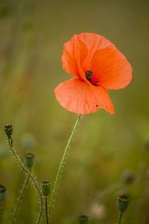 England, Northumberland, Corbridge. von Jason Friend