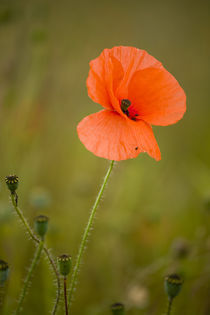 England, Northumberland, Corbridge. by Jason Friend