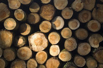 Scotland, Scottish Borders. Pile Of Logs. by Jason Friend