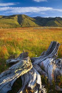 Argentinien, Patagonien, Nationalpark Los Glaciares. von Jason Friend