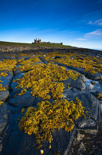 England, Northumberland, Dunstanburgh Castle. by Jason Friend