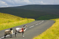 England, Northumberland, North Pennines. von Jason Friend