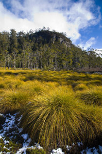 Australia, Tasmania, Cradle Mt - Lake St Clair National Park. by Jason Friend