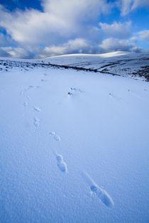 England, Northumberland, Northumberland National Park. by Jason Friend
