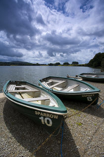 England, Cumbria, Talkin Tarn Country Park. by Jason Friend