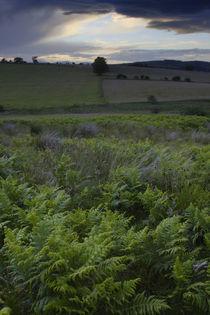England, Northumberland, Rothbury von Jason Friend