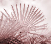 Chusan Fan Palm by Geoff du Feu