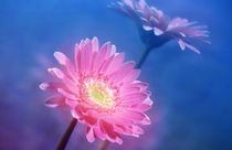 Close up of pink and lavender flowers von Panoramic Images