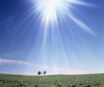 Bright star like light floating in blue sky and clouds over green land by Panoramic Images