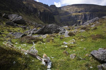 Dead Sheep in the Comeragh Mountains, County Waterford, Ireland von Panoramic Images