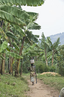 Woman walking in a banana grove with a machete von Panoramic Images