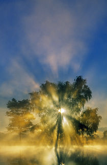 Sunstar through mist and silhouetted tree, Williams Pond, Maryland, USA. von Panoramic Images